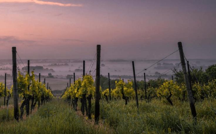 Viva Wine Group and Solvatten
